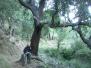 071124 Almedijar - Matet - Almedijar