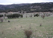 Panoramica con vaca
