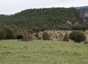 Vaca y prado