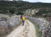 Siguiendo el Camino