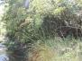 100822 Nacimiento rio Bordon
