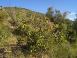 13_excursion-a-espadilla-2006-10-07-s