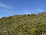 18_excursion-a-espadilla-2006-10-07-s