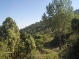 22_excursion-al-pil_-de-la-creu-2006-10-28-s