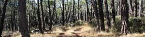 Bosque de Orihuela del Tremedal